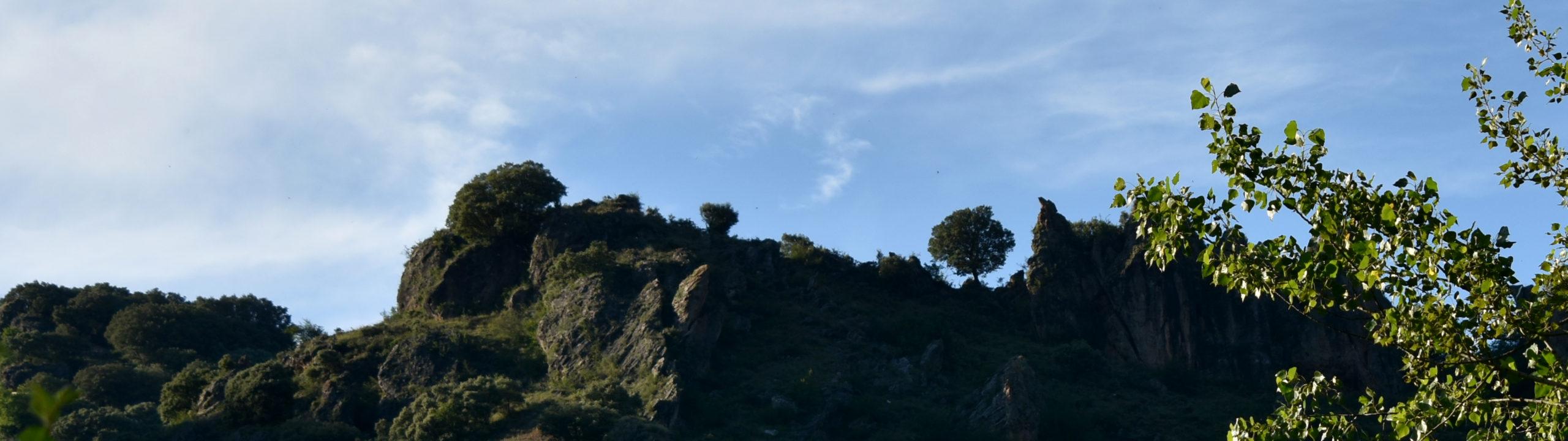 Árboles en el monte / Trees on the hill
