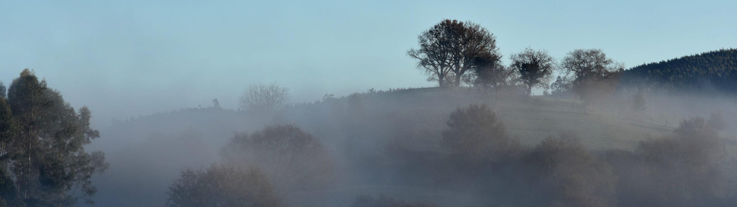 Árboles en la niebla
